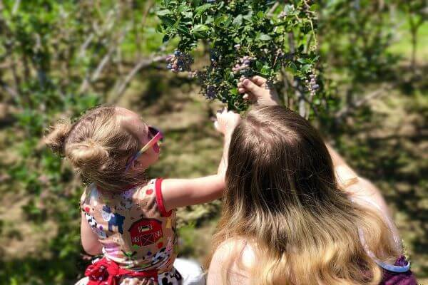 mother and child picking blueberries