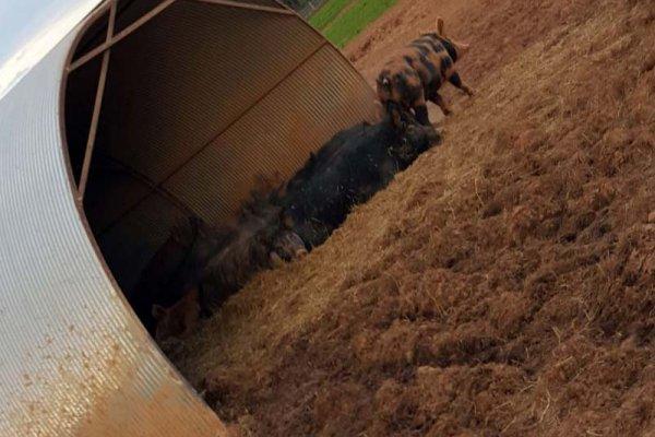 Rettland Farm: a farm-to-table story