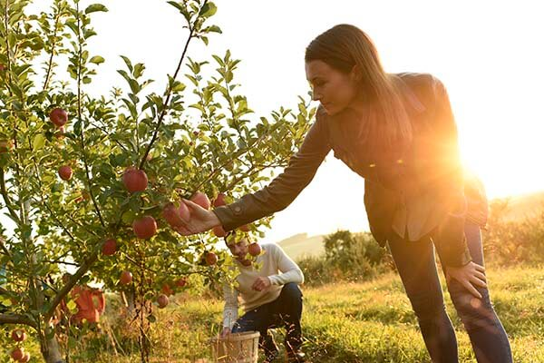 Hit the county again to tour the orchards or pick your own fruit at Boyer's Nurseries & Orchards or Hollabaugh Brothers Fruit Farm & Market.