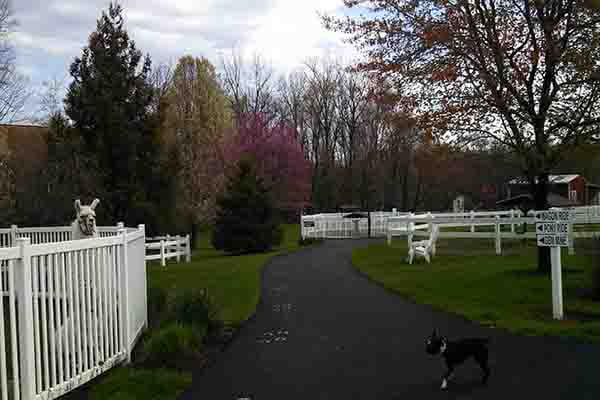 Land of Little Horses Farm Park
