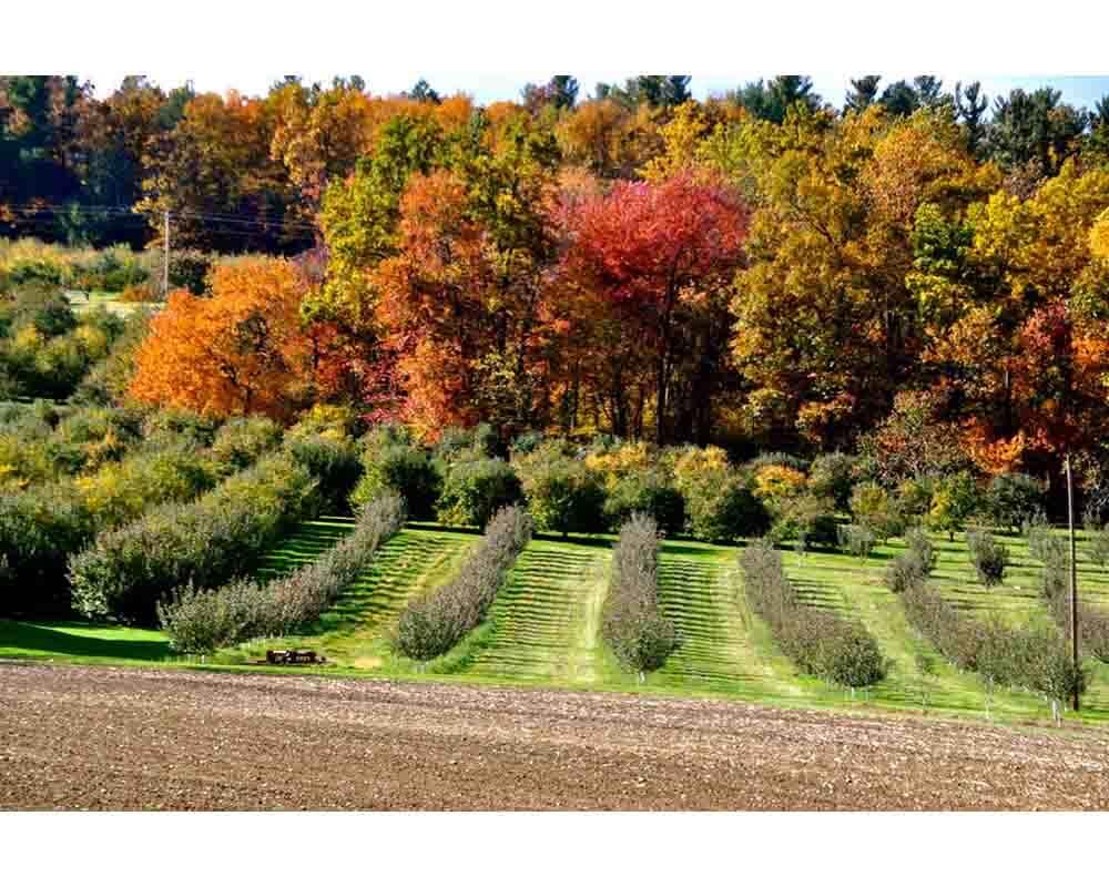 Beech Springs Farm   Gettysburg PA Things to Do