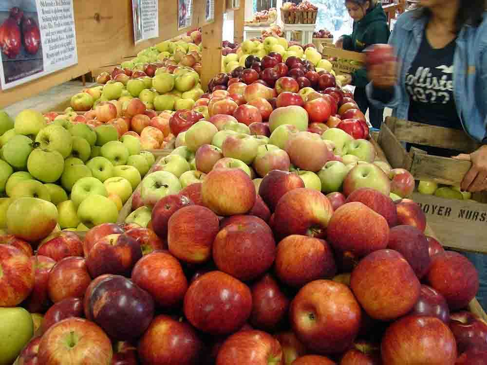 Boyer Nurseries & Orchards