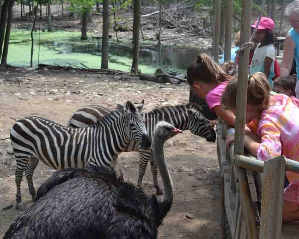 kangaroo zoo coupons 2017 2018 best cars reviews