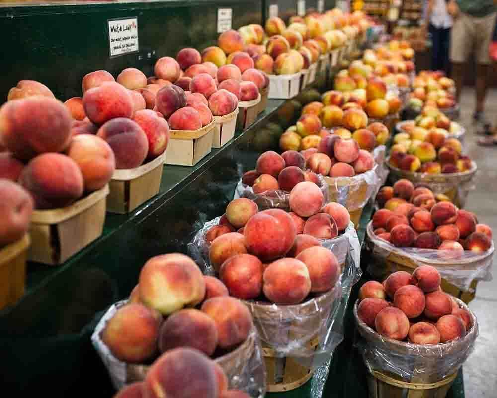 Hollabaugh Bros. Inc. Fruit Farm and Market