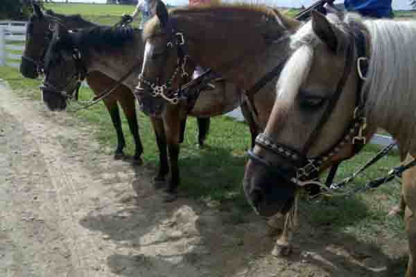 Hickory Hollow Horse Tours