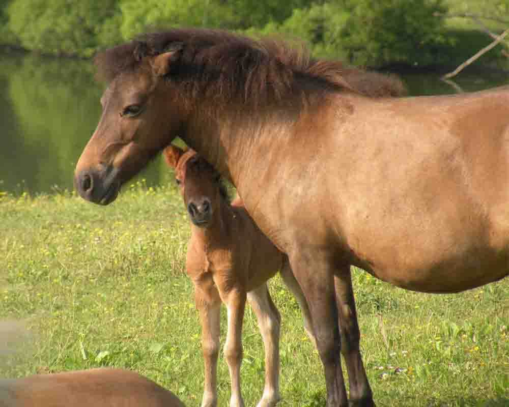 Land Of Little Horses Farm Park Gettysburg Pa Things To Do