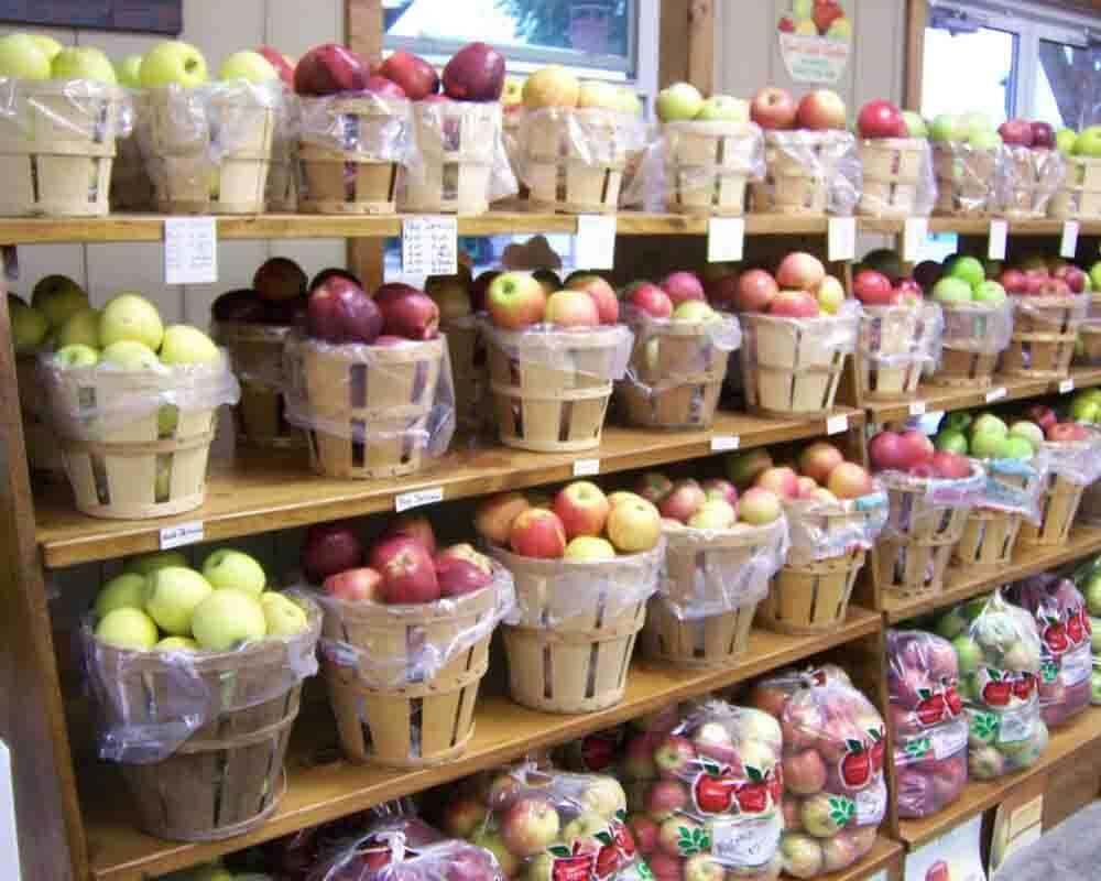 mcdannell-fruit-farm-m